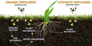 Picture 4.Organic vs Synthetic Fertilizer Source : Milorganite.com
