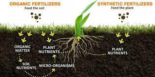 Picture 4.Organic vs Synthetic Fertilizer Source : Milorganite.com